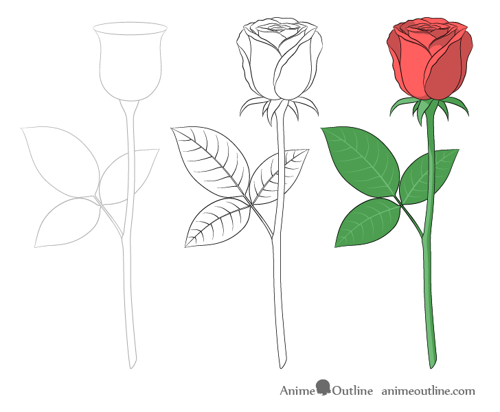 Full rose step by step drawing