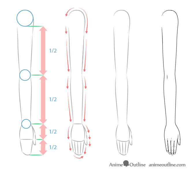 Anime arms proportions drawing
