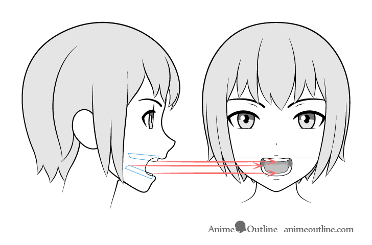 Teeth drawing different views